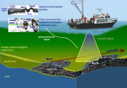Overview of Acoustic Survey